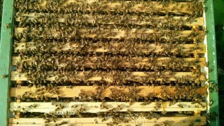 web-hive
