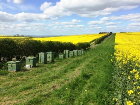 Bee Hives Row