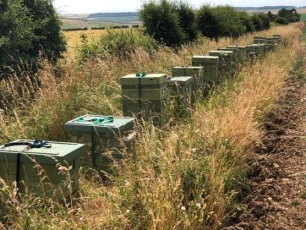 Hives On Borage